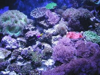 水族館 blog.jpg